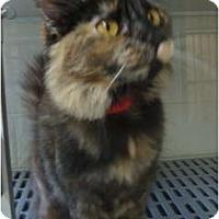 Adopt A Pet :: Meow - Winter Haven, FL