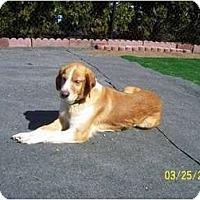 Adopt A Pet :: Zara - Madison, WI