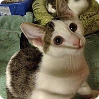 Adopt A Pet :: Wesson - Byron Center, MI
