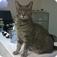 Adopt A Pet :: Fran - Trevose, PA