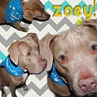 Adopt A Pet :: 'ZOEY' - Brooksville, FL