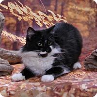 Adopt A Pet :: Eva - Seminole, FL
