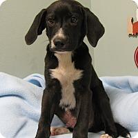 Adopt A Pet :: Staten - Groton, MA