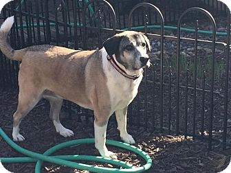 Cattle Dog Mix Dog for adoption in Mauston, Wisconsin - Abigail