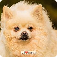 Adopt A Pet :: PRUNELLE - Ile-Perrot, QC