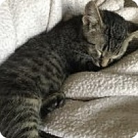Adopt A Pet :: Oliver - McHenry, IL