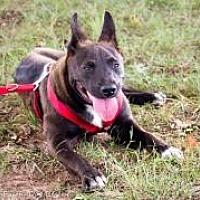 Adopt A Pet :: Chutes - Enfield, CT