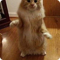 Adopt A Pet :: Sonny - Gerrardstown, WV