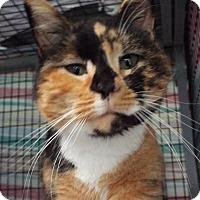Adopt A Pet :: Apple - Grants Pass, OR