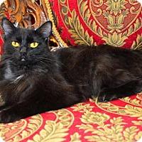 Adopt A Pet :: Cinda - Buford, GA