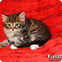 Adopt A Pet :: Romeo - Buford, GA