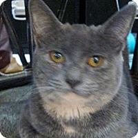 Adopt A Pet :: Pila - Cincinnati, OH