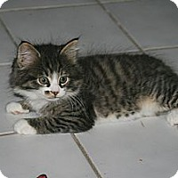Adopt A Pet :: Flynn - Arlington, VA
