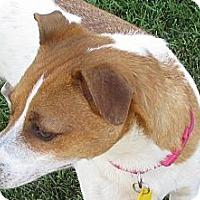 Adopt A Pet :: LADY I - Scottsdale, AZ