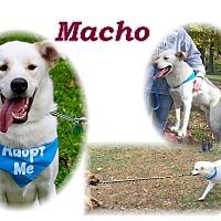 Adopt A Pet :: Macho - New Canaan, CT
