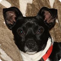 Adopt A Pet :: Daryl - Edmonton, AB