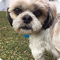 Adopt A Pet :: Riley - Doylestown, PA
