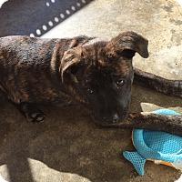 Adopt A Pet :: Bea - PARSIPPANY, NJ
