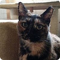 Adopt A Pet :: Camilla - Wakinsville, GA