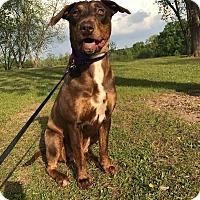 Adopt A Pet :: Ella - Youngsville, NC