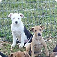 Adopt A Pet :: Hank - Salem, NH