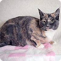 Adopt A Pet :: Josie - Shelton, WA