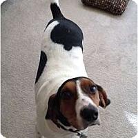 Adopt A Pet :: Chase - Seattle, WA