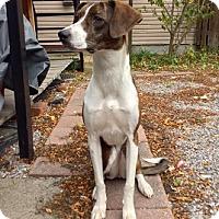 Adopt A Pet :: Annie - Hamilton, ON