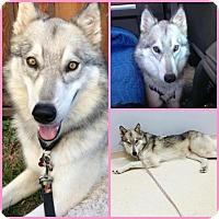 Adopt A Pet :: Bella - Ashland, OR