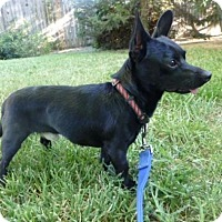 Adopt A Pet :: Dandy - Sacramento, CA