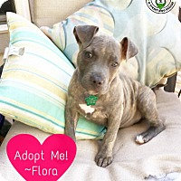 Adopt A Pet :: Flora - Kingwood, TX