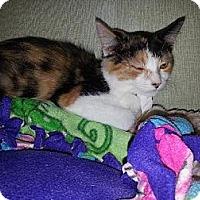 Adopt A Pet :: Sparkle - Iroquois, IL