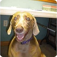 Adopt A Pet :: Sophie - Eustis, FL