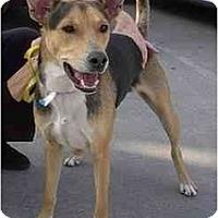 Adopt A Pet :: Katie - dewey, AZ