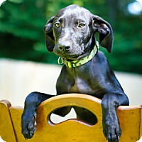 Adopt A Pet :: Ziva - Bradenton, FL