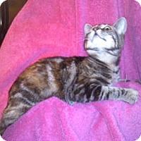 Adopt A Pet :: K-Sasha4-Brianna - Colorado Springs, CO