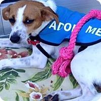 Adopt A Pet :: Sweet Pea - Edisto Island, SC