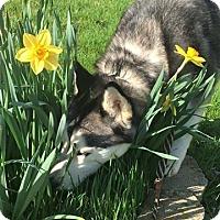Adopt A Pet :: Mallie - Zanesville, OH