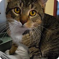 Adopt A Pet :: Winchester - Bay Shore, NY