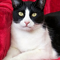 Adopt A Pet :: Buster - St Louis, MO