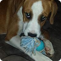 Adopt A Pet :: Peties meet me 5/5 - Manchester, CT