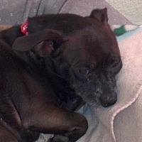 Adopt A Pet :: Moe - Eugene, OR