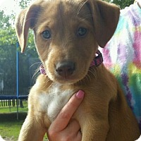 Adopt A Pet :: Maddy - Slidell, LA