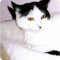 Adopt A Pet :: Dottie - Medway, MA