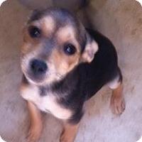 Adopt A Pet :: Churro - pasadena, CA
