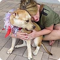 Adopt A Pet :: Chula - Scottsdale, AZ