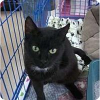 Adopt A Pet :: Alexxa - Chesapeake, VA