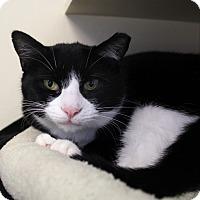 Adopt A Pet :: Samantha Jane - Chicago, IL