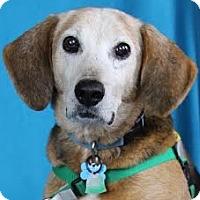 Adopt A Pet :: Roscoe - Minneapolis, MN
