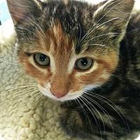 Adopt A Pet :: Alexi - N. Billerica, MA